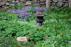 lantern-wildflowers