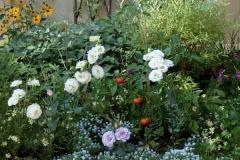 veggie-annuals