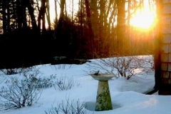 bird winter 2013